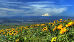 landscape-near-mount-hood-oregon